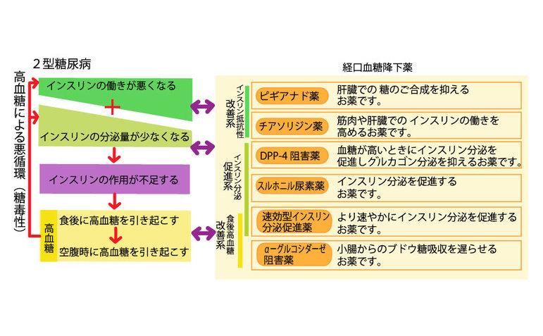 2型糖尿病と経口血糖降下薬の種類