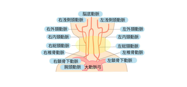 脳へ向かう血管